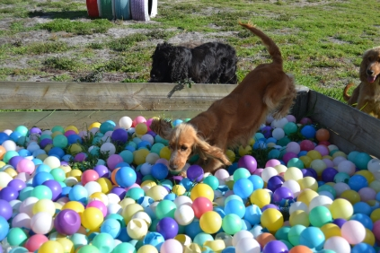 ADULT AGILITY PARK- Banksia Park Puppies - 15 of 117