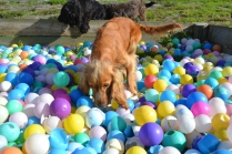 ADULT AGILITY PARK- Banksia Park Puppies - 17 of 117