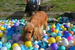 ADULT AGILITY PARK- Banksia Park Puppies - 18 of 117