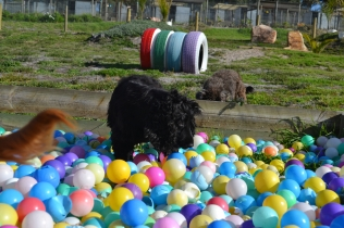 ADULT AGILITY PARK- Banksia Park Puppies - 19 of 117