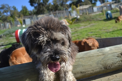 ADULT AGILITY PARK- Banksia Park Puppies - 24 of 117