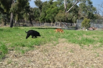 ADULT AGILITY PARK- Banksia Park Puppies - 30 of 117