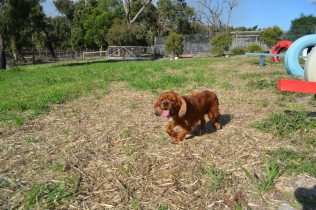 ADULT AGILITY PARK- Banksia Park Puppies - 33 of 117