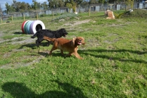 ADULT AGILITY PARK- Banksia Park Puppies - 34 of 117