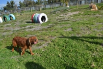 ADULT AGILITY PARK- Banksia Park Puppies - 35 of 117