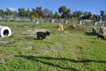 ADULT AGILITY PARK- Banksia Park Puppies - 36 of 117