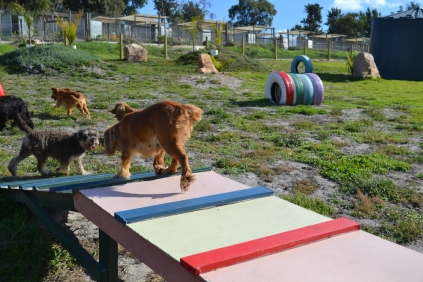 ADULT AGILITY PARK- Banksia Park Puppies - 4 of 117