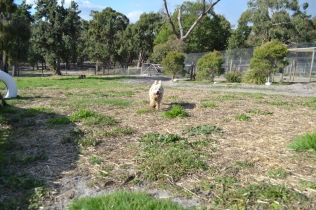 ADULT AGILITY PARK- Banksia Park Puppies - 52 of 117