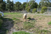 ADULT AGILITY PARK- Banksia Park Puppies - 53 of 117