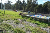ADULT AGILITY PARK- Banksia Park Puppies - 59 of 117