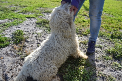 ADULT AGILITY PARK- Banksia Park Puppies - 62 of 117