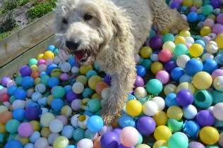ADULT AGILITY PARK- Banksia Park Puppies - 67 of 117