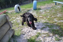 ADULT AGILITY PARK- Banksia Park Puppies - 68 of 117