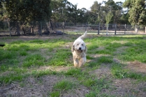 ADULT AGILITY PARK- Banksia Park Puppies - 75 of 117