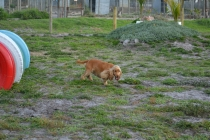 ADULT AGILITY PARK- Banksia Park Puppies - 86 of 117