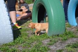 Banksia Park Puppies Animal Studies - 1 of 30 (1)