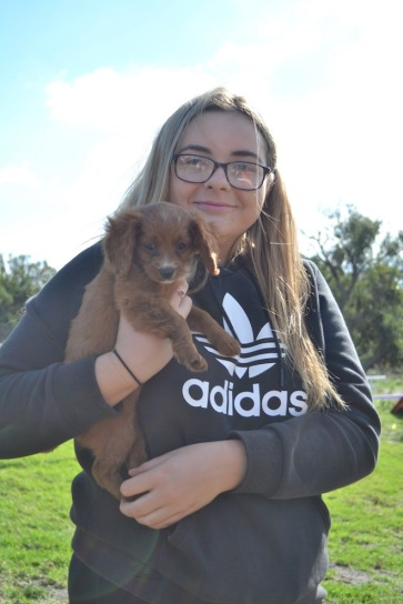 Banksia Park Puppies Animal Studies - 1 of 30 (11)