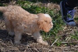 Banksia Park Puppies Animal Studies - 1 of 30 (12)