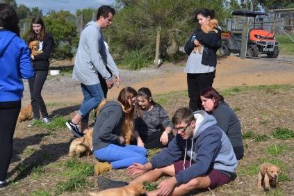 Banksia Park Puppies Animal Studies - 1 of 30 (16)