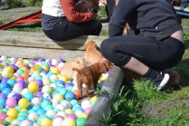 Banksia Park Puppies Animal Studies - 1 of 30 (17)