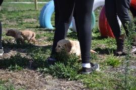 Banksia Park Puppies Animal Studies - 1 of 30 (20)