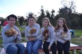 Banksia Park Puppies Animal Studies - 1 of 30 (22)