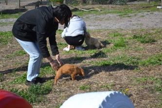 Banksia Park Puppies Animal Studies - 1 of 30 (25)