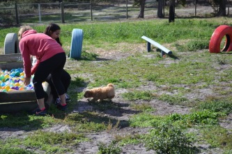 Banksia Park Puppies Animal Studies - 1 of 30 (26)