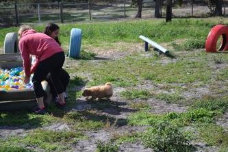 Banksia Park Puppies Animal Studies - 1 of 30 (26)