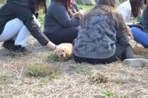Banksia Park Puppies Animal Studies - 1 of 30 (28)