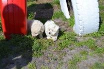 Banksia Park Puppies Animal Studies - 1 of 30 (7)