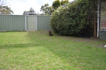 WHOOSHY- Banksia Park Puppies - 2 of 12