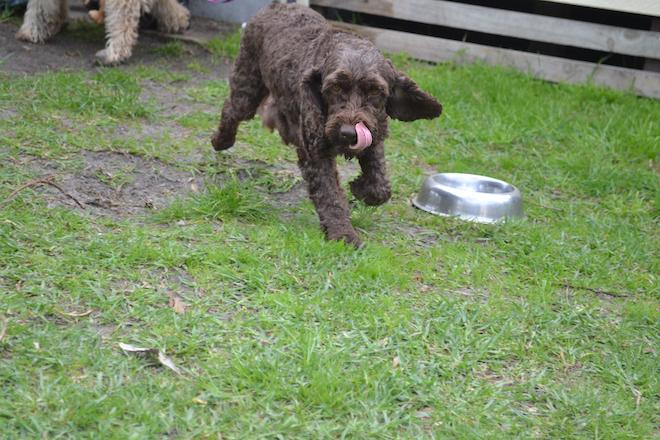 Dog Training Doncaster Melbourne