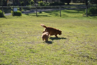 Rozelle and Pups- Banksia Park Puppies - 21 of 142