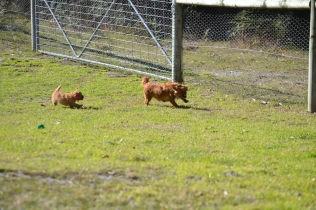 Rozelle and Pups- Banksia Park Puppies - 22 of 142