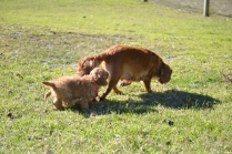 Rozelle and Pups- Banksia Park Puppies - 37 of 142