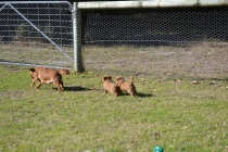 Rozelle and Pups- Banksia Park Puppies - 61 of 142
