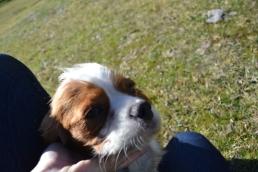 Dasha- Banksia Park Puppies - 18 of 24