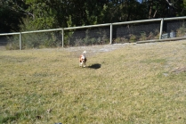 Dasha- Banksia Park Puppies - 2 of 24