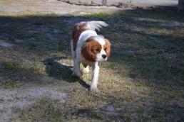 Dasha- Banksia Park Puppies - 20 of 24
