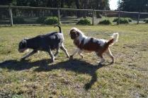 Dasha- Banksia Park Puppies - 7 of 24