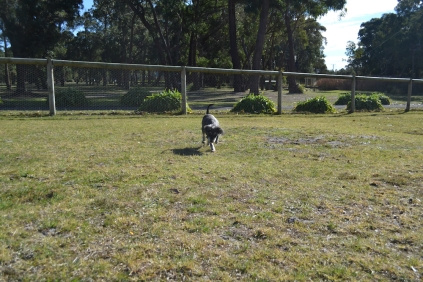 Floss- Banksia Park Puppies - 1 of 22