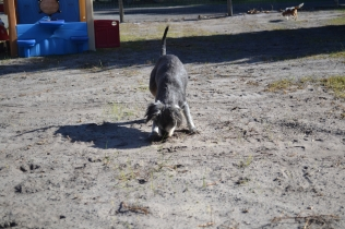 Floss- Banksia Park Puppies - 10 of 22