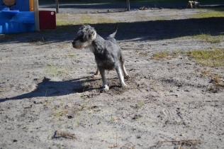 Floss- Banksia Park Puppies - 11 of 22