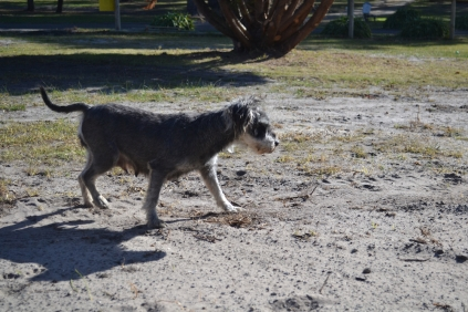 Floss- Banksia Park Puppies - 12 of 22