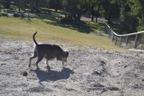 Floss- Banksia Park Puppies - 14 of 22