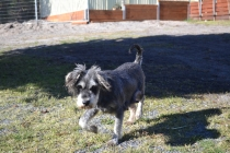 Floss- Banksia Park Puppies - 15 of 22