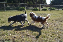 Floss- Banksia Park Puppies - 2 of 22