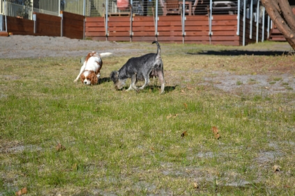Floss- Banksia Park Puppies - 20 of 22