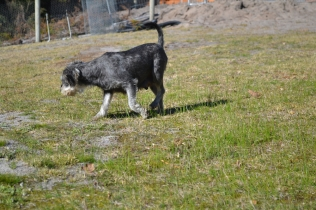 Floss- Banksia Park Puppies - 21 of 22